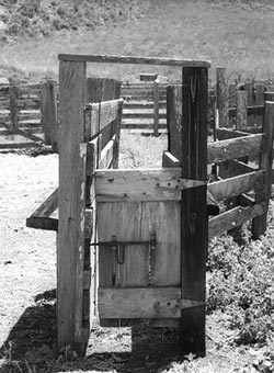 A small wooden gate blocks the end of a chute that extends from a corral, marked by wood fencing.