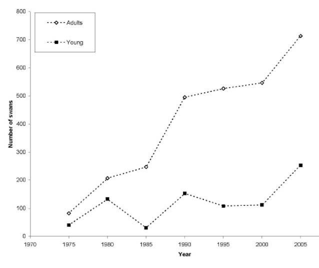 a line chart showing how denali swan populations increased much faster than alaska-wide