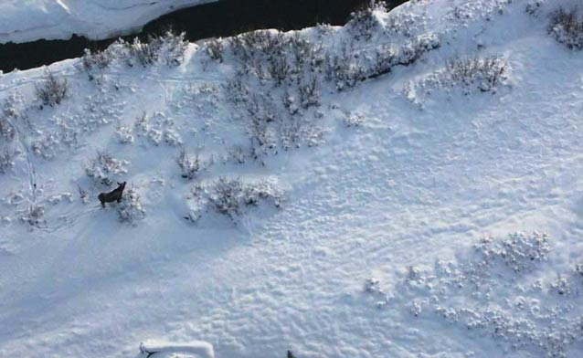 snowy landscape with a moose walking past an open creek