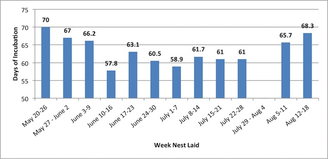 Figure 3. Average incubation days of nests by week nest was laid (2014).