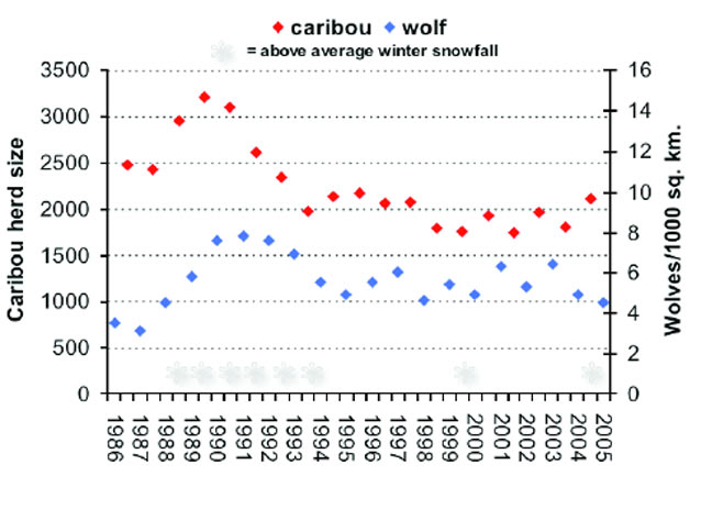 the effects of wold predation on prey population of large ungulates Ungulate population models with predation: on the effect of alternate prey on wolf total ecological effects of large carnivores in anthropogenic.