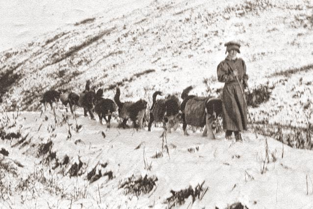 black and white historic image of a woman and team of sled dogs