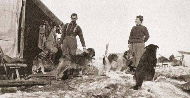 black and white historic image of a man and woman with several sled dogs