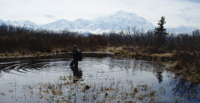 person wading in a knee-deep pond fringed by brush, mountains in the distance
