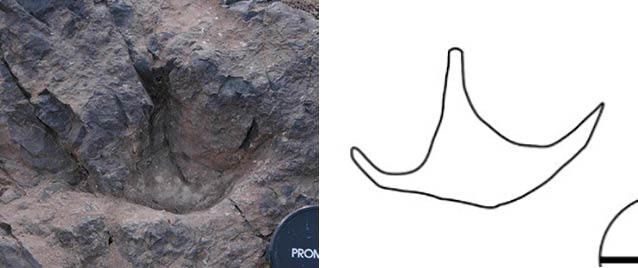 three-toed footprints in rock with a line drawing to help show what they look like