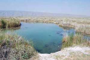 One of many permanent spring-feed streams at Cuatrocienegas Protected Area, Coahuila, Mexico.