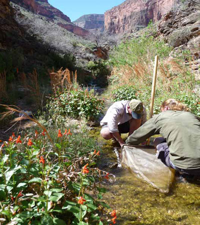 Collecting aquatic macroinvertebrate samples in Grand Canyon National Park