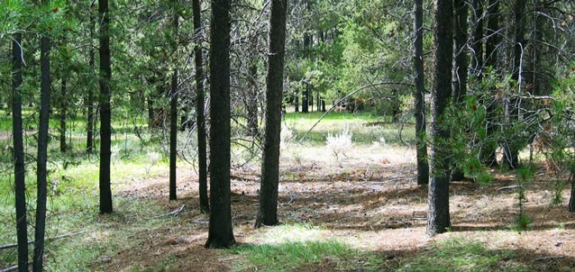 A landscape of open clearings between slender pines influenced the outcome of the battle.