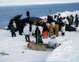 many people standing on an icy coastline around a whale