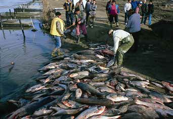 people standing next to a huge pile of dead fish by a river