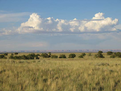 Grasslands Of The American Southwest Introduction And Grassland