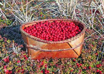 basket of red berries