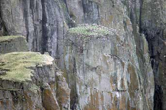 steep cliffs with birds nested on them