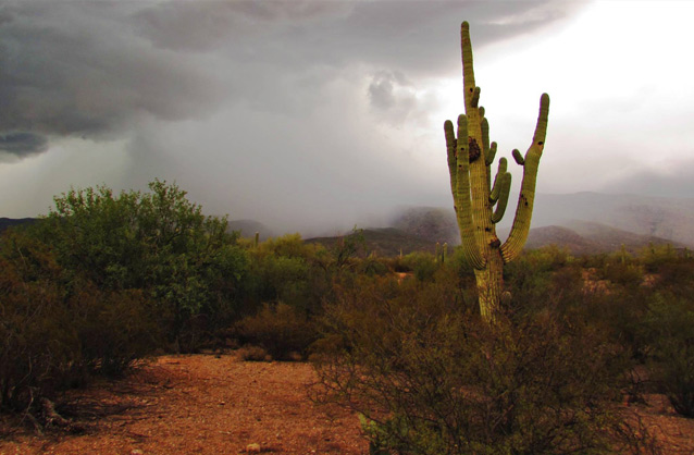 A Saguaro cactus stands in the foreground as rain falls nearby