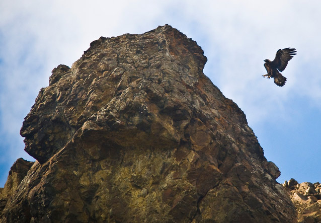 a golden eagle about to land on a large rock