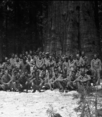B&W; soldiers in front of large Sequoia