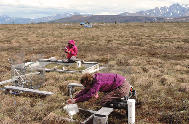two researchers lean over boxes capturing gases in the brown tundra