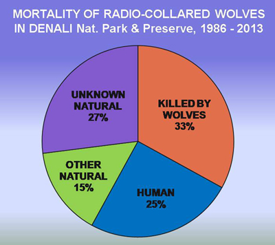 a pie chart that shows that most collared wolves in denali are killed by other wolves