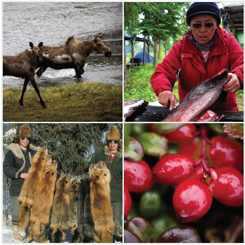 a variety of subistence activities including hunting, fishing, trapping, and picking berries
