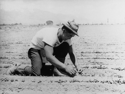A young man in a brimmed hat and white t-shirt kneels in a dusty field to plant seedlings.