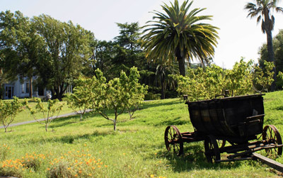 A wagon stands in an orchard of peach trees, backed by palm trees.