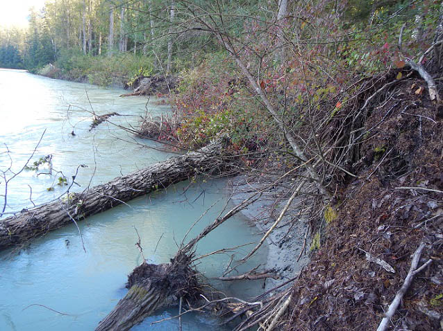 Fallen trees in a river.