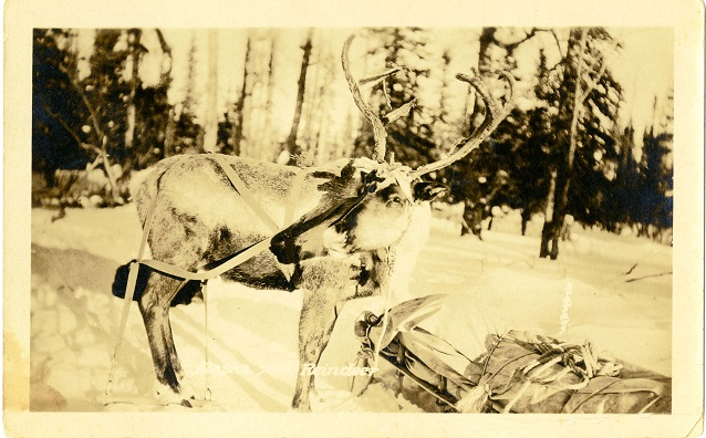 Reindeer next to a loaded sled in a snowy landscape.