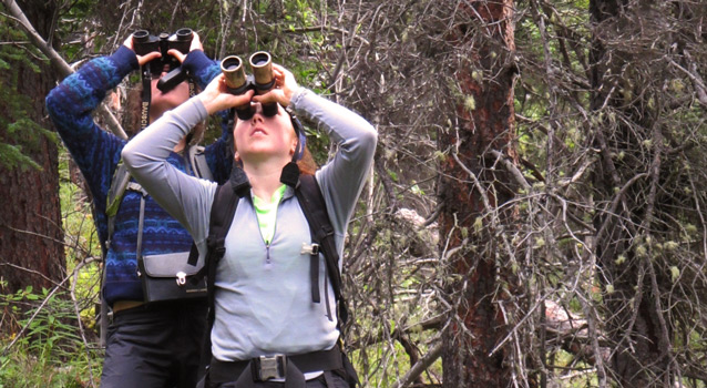 two researchers use binoculars to count spruce cones