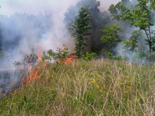 Prescribed fire in a small Black Belt remnant on the Natchez Trace Parkway
