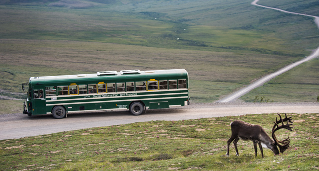 a bus on a dirt road sits while passengers watch a caribou grazing