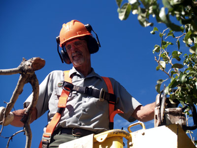 Equipped with hardhat, harness, goggles, and ear protectors, Gerry uses a chainsaw to prune trees.