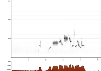 a spectrogram that of a fox sparrow song