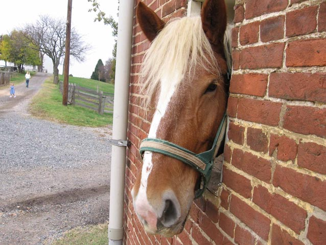 a horse head peering out of a brick barn