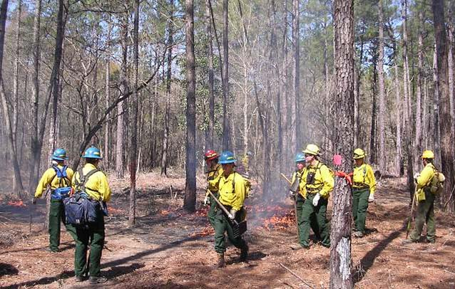 Wildland fire operations at Big Thicket National Preserve