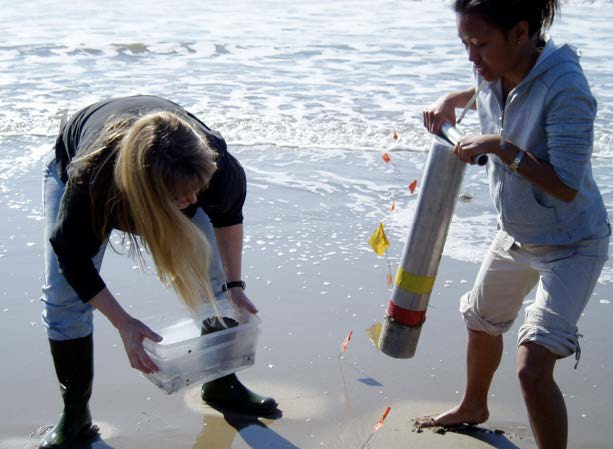 students collecting sand crabs