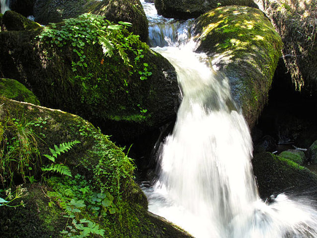 A small waterfall rushes over mossy rocks