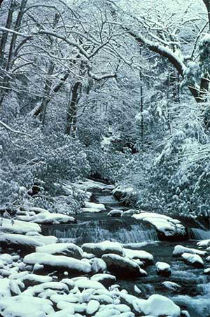 Snowy stream in Great Smoky Mountains National Park