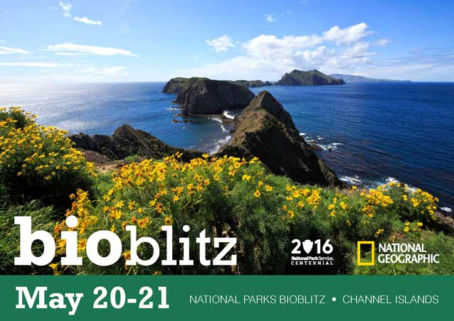 National Parks BioBlitz - Channel Islands