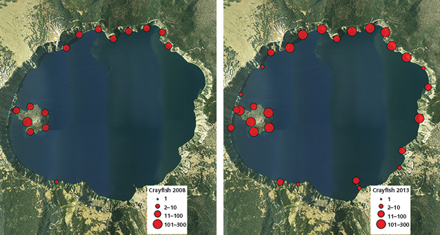 Side-by-side map comparison of crayfish distribution at Crater, 2008 and 2013