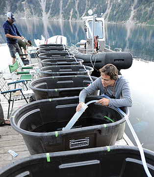 A biologist prepares mesocosm habitats for study of newt-crayfish interactions