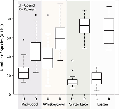 Graph of box plots that show mean species richness of upland (U) and riparian (R) plots