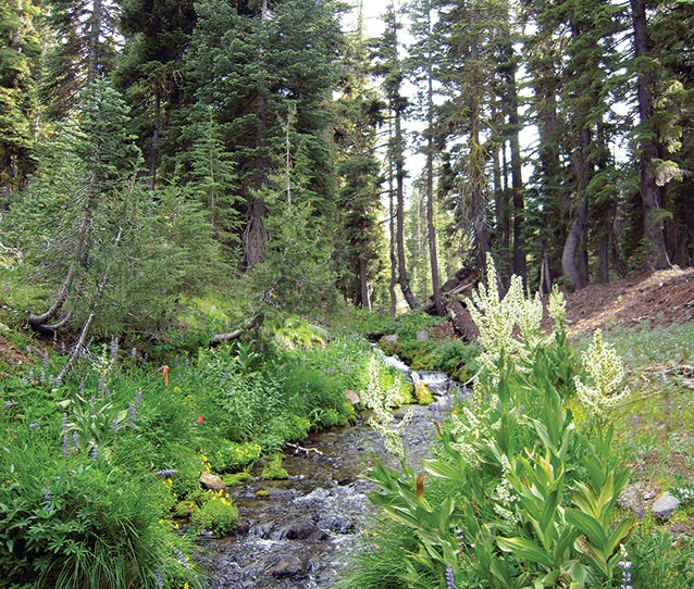 Stream and forest scene at Lassen Volcanic National Park