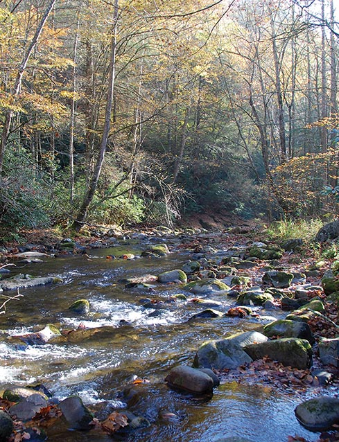 Stream and forest in Great Smoky Mountains National Park