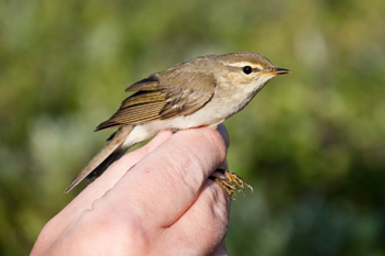 a small bird is held in a hand