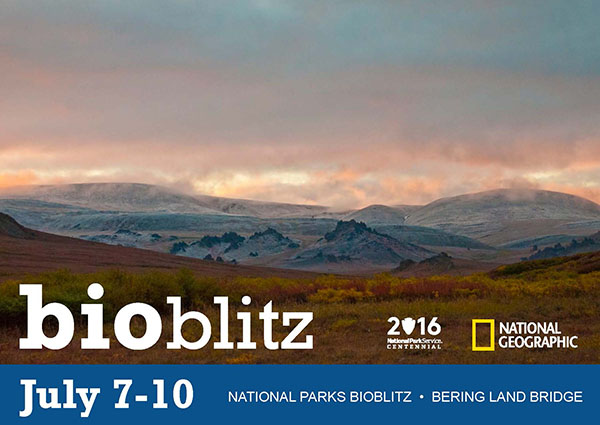 Bering Land Bridge BioBlitz Save the Date Postcard