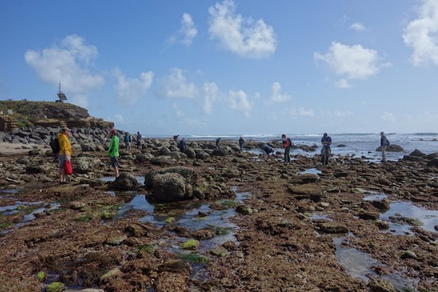 Observers in tidepools at Cabrillo during BioBlitz 2016