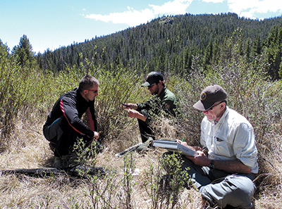 Scientists measure willow plants on the elk winter range in Rocky Mountain National Park