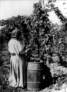 Black and white photo of a woman standing next to a large vine and bucket