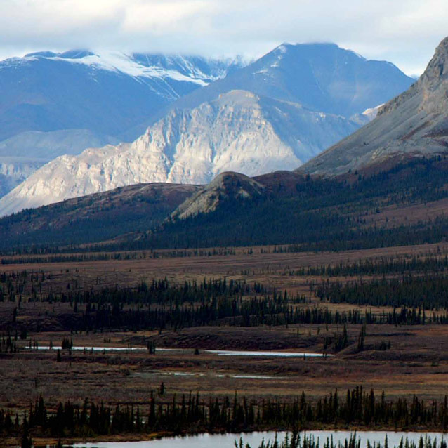 landscape of spruce forests and mountains