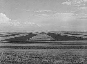 Black and white photo of a large crop field